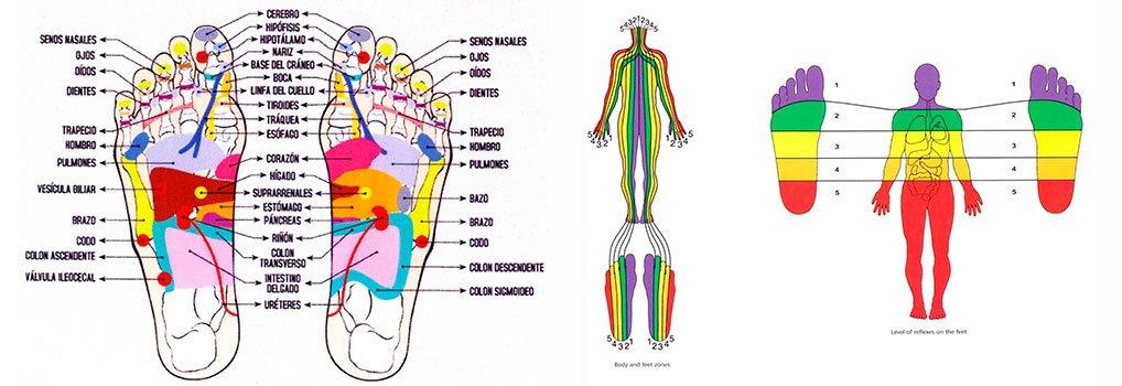 Terapia zonal y mapa de puntos reflejos
